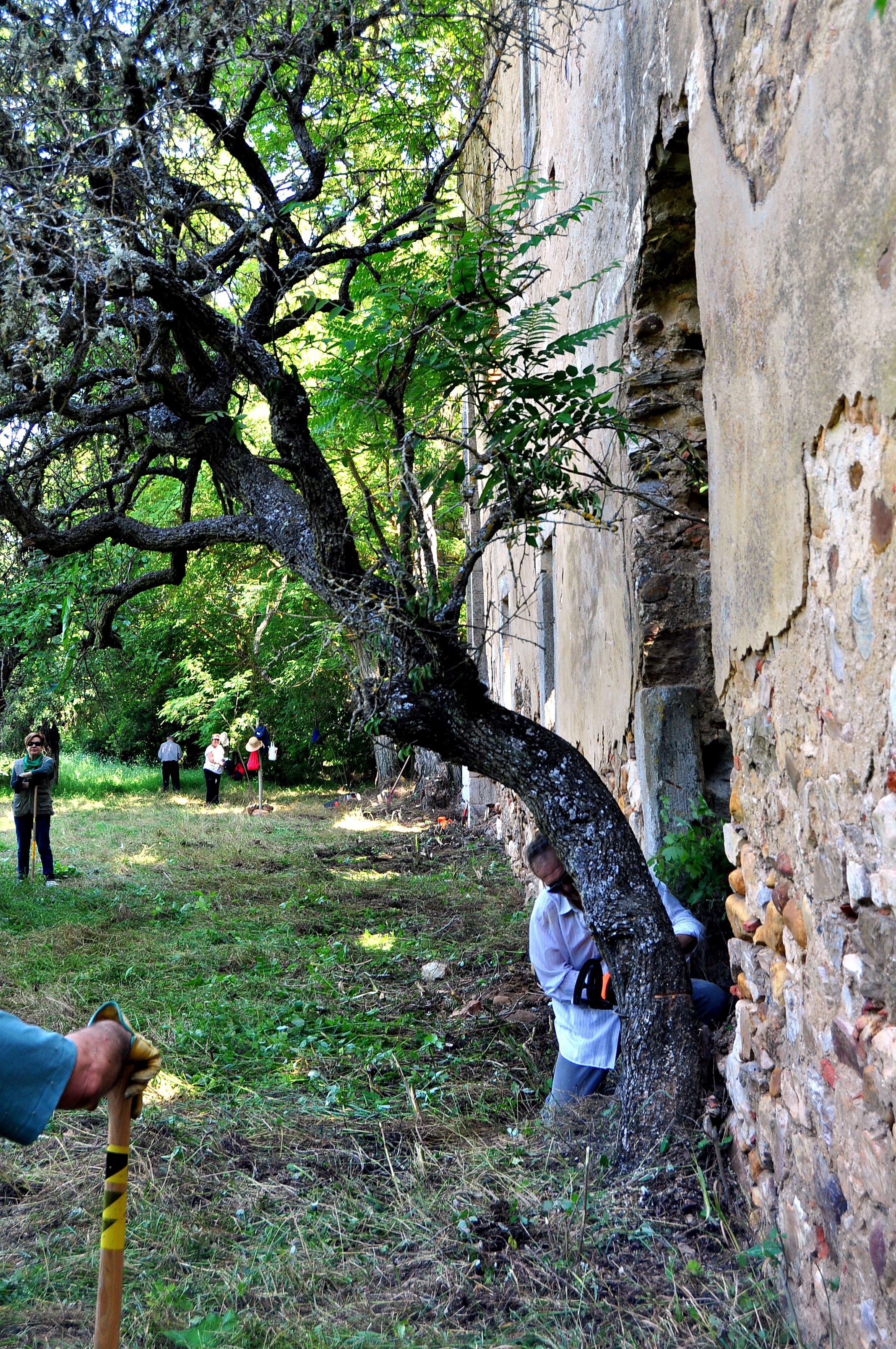 Eliminando un árbol seco pegado a la fachada.