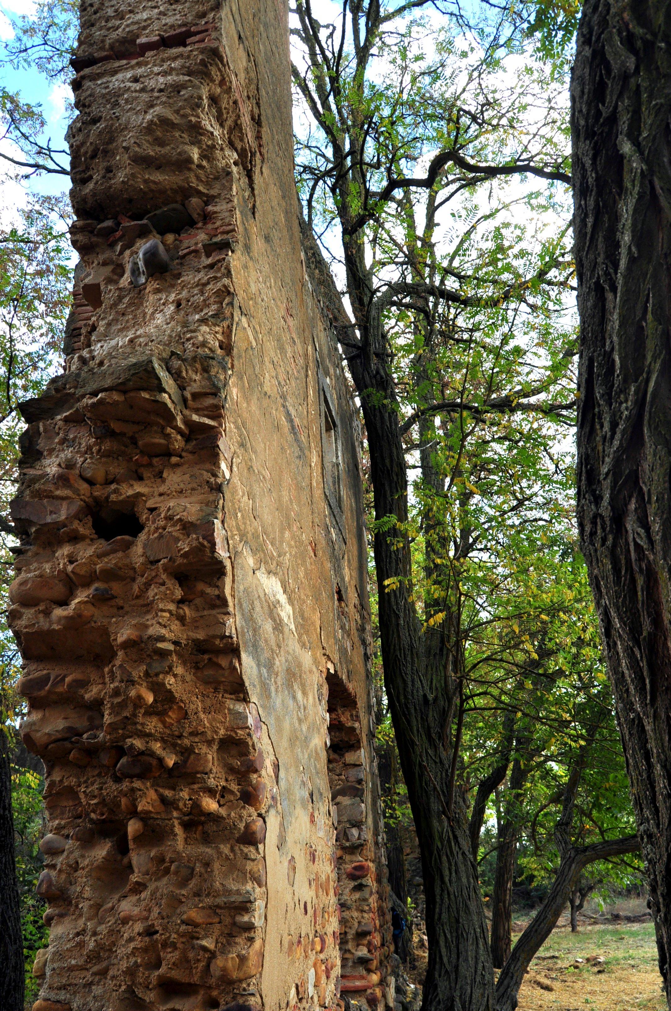 Árboles contra muro  y al revés.