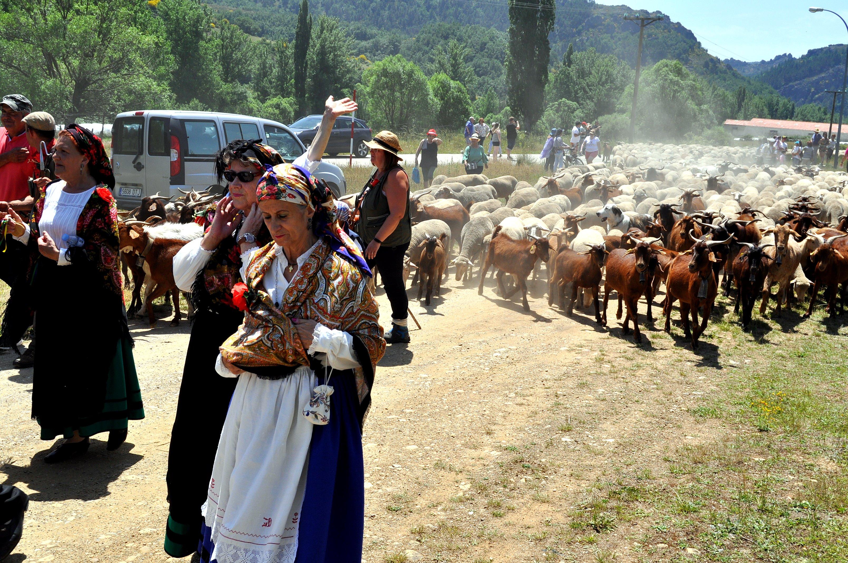 Ataviadas con el traje tradicional de Prioro, salen a recibir al rebaño.